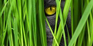 katt gräs